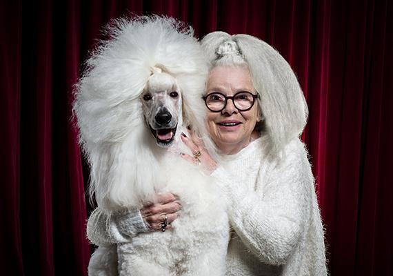 Det finns en hund för alla